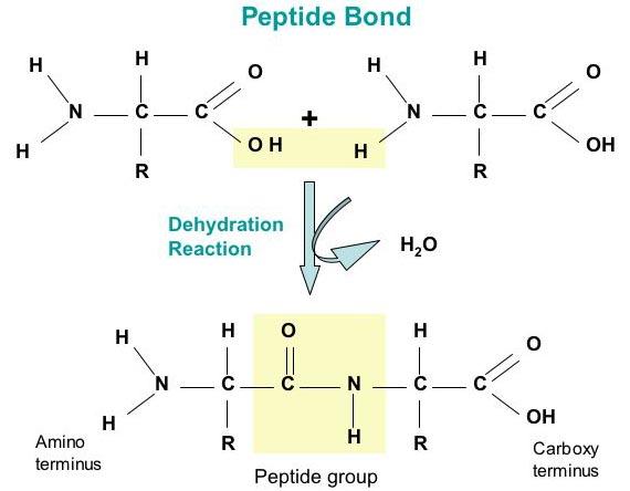 Peptide Services Portfolio